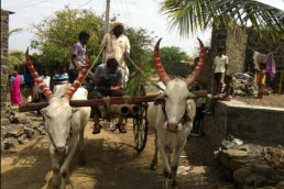 Ox cart India Preston Street Films