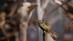 RAMM humming bird